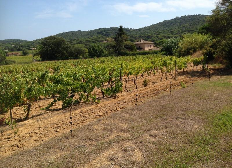 Vigneramatuelle_Infos pratiques