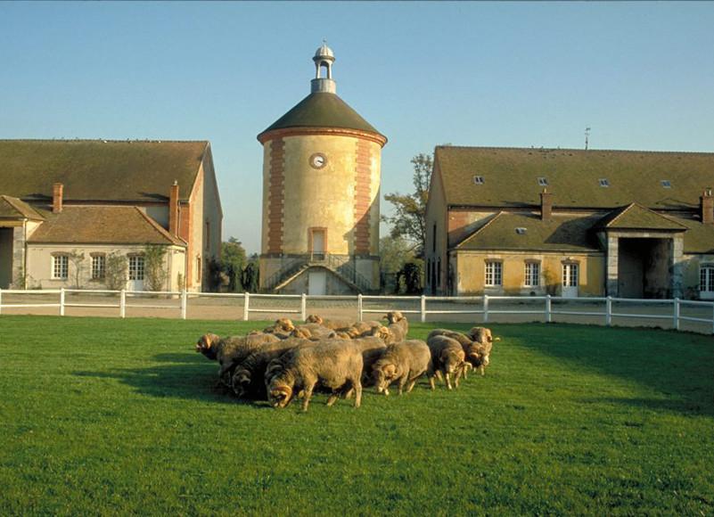 La Bergerie nationale, Rambouillet