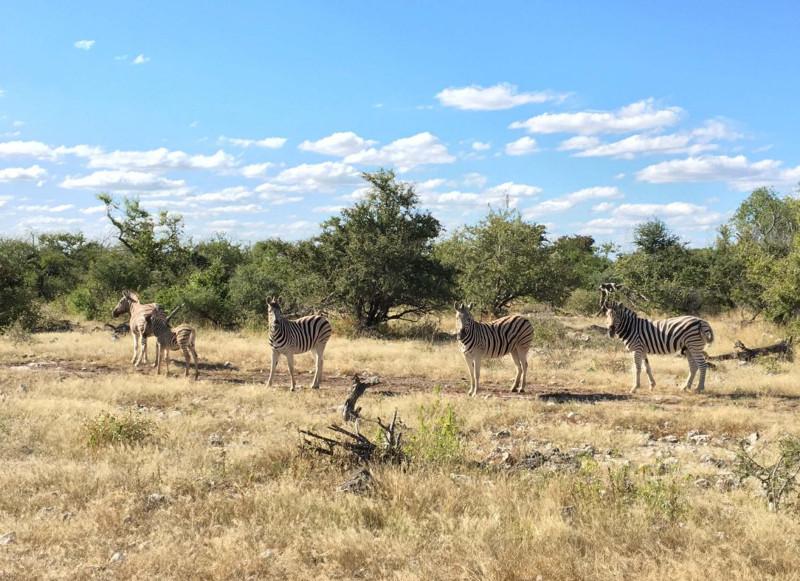 Namibie, Etosha