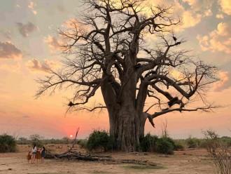 Un safari en famille en Zambie