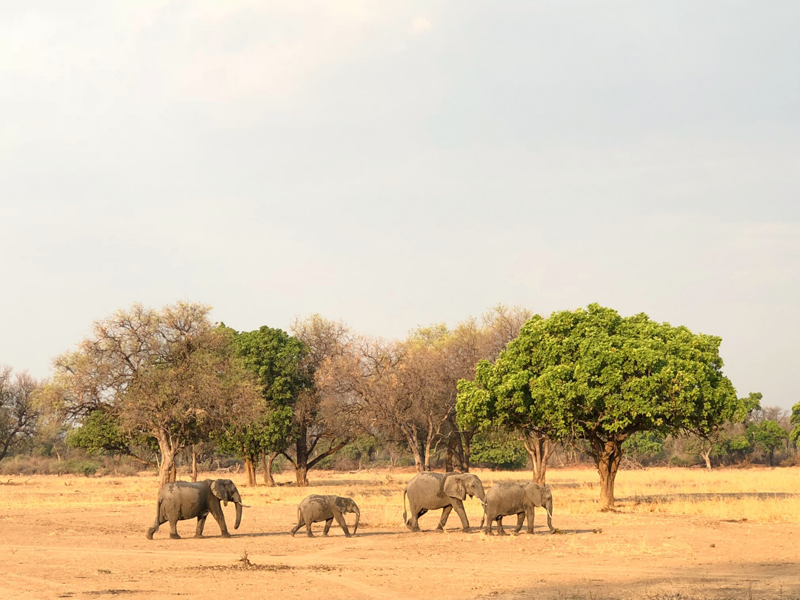 Zambie 25